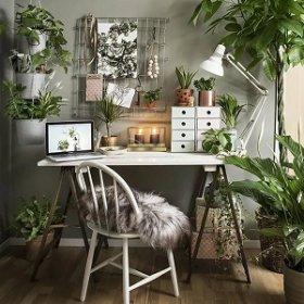 Растения, которые повысят вашу продуктивность