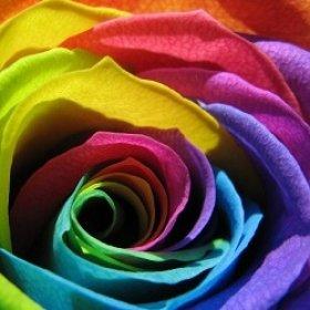 Что означают разные цвета роз?